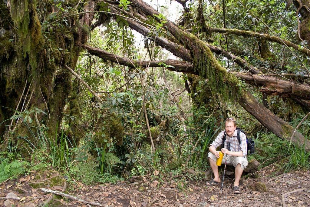 bossen Tanzania