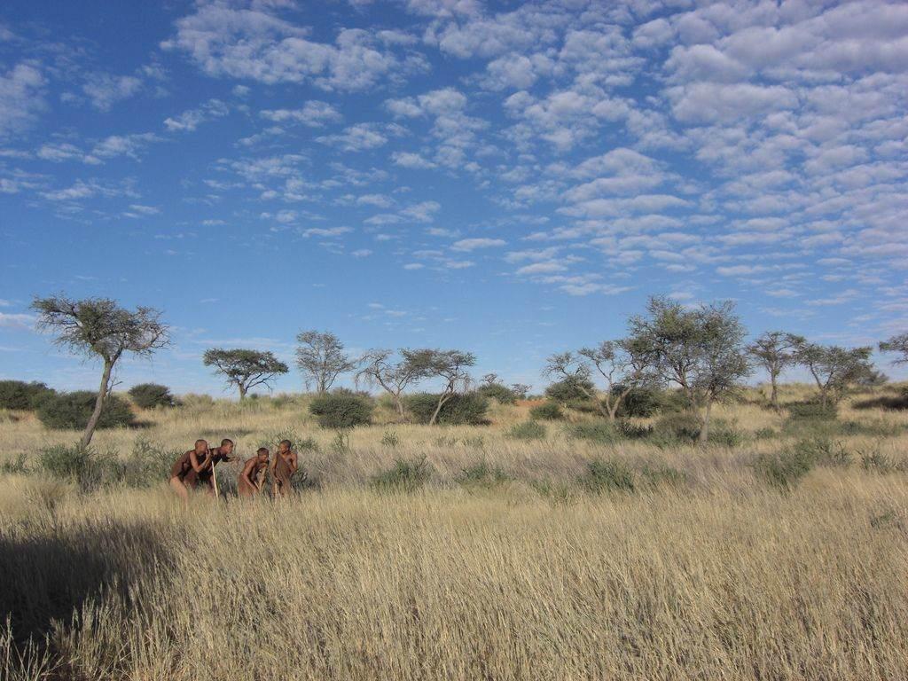 Kalahari woestijn