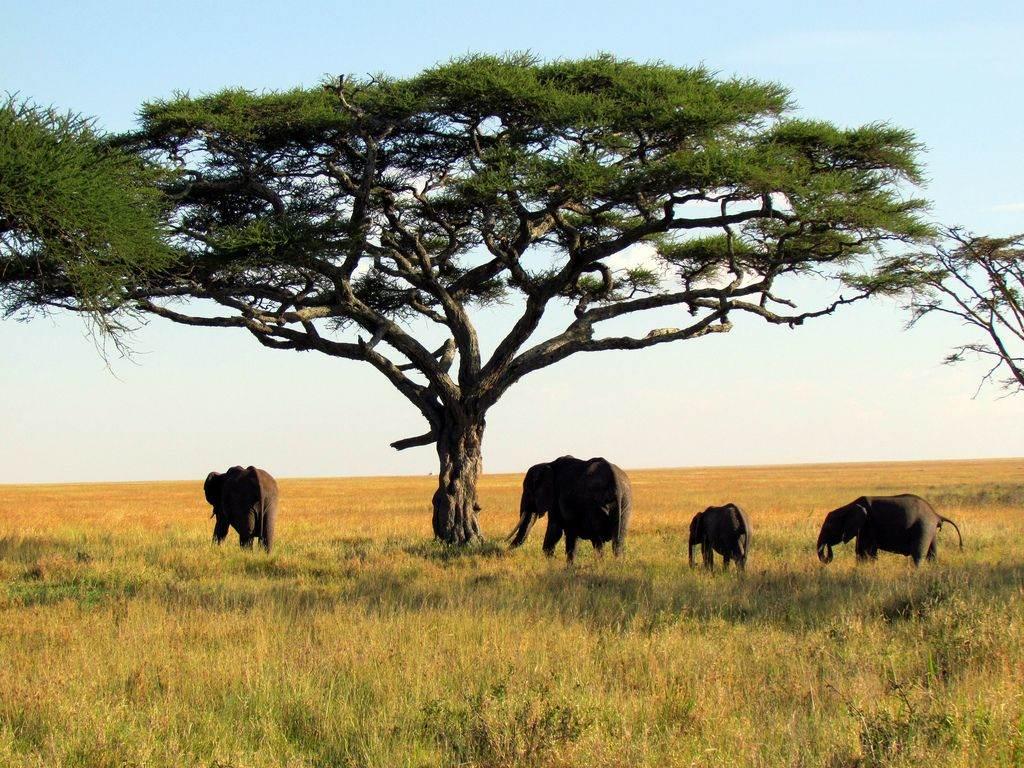 safari rondreis tanzania