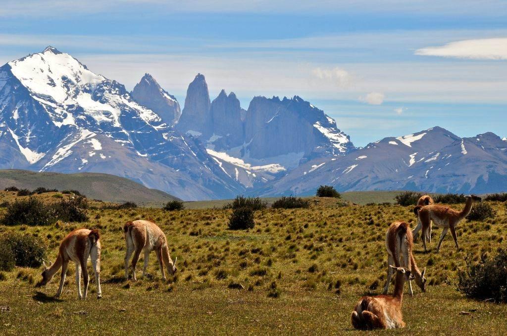 Dieren patagonie chili