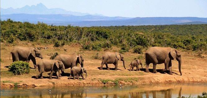 Rondreizen door Afrika
