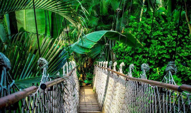 mooie jungletochten in thailand