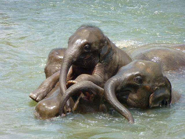baby-elephant-256657_640