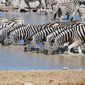 Mountain Zebra National Park Zuid Afrika