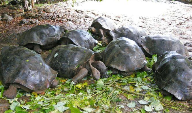 Ecuador en de Galapagos Eilanden