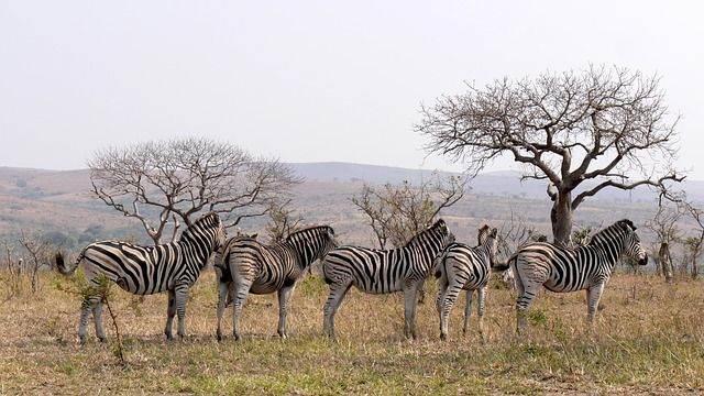 zuid-afrika38