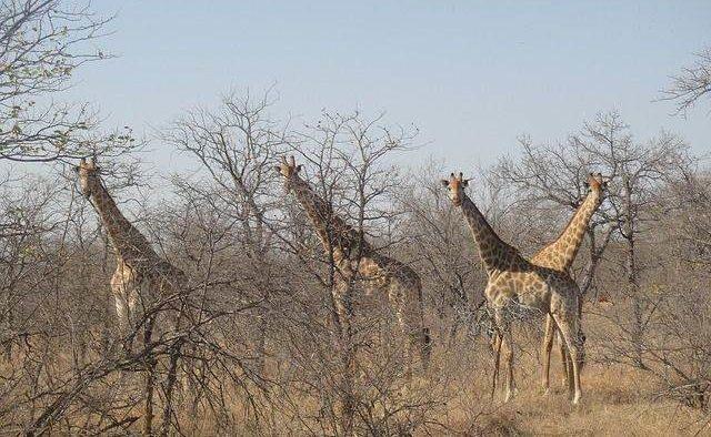 Eén van de bekendste safariparken in de wereld