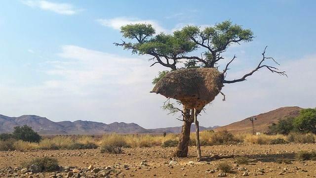 africa-1170007_640