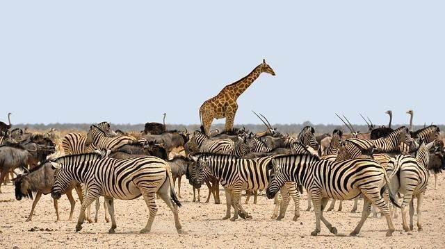 africa-1170177_640