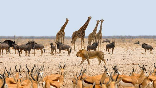 africa-1170179_640