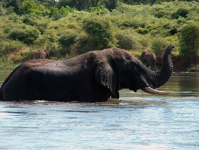 elephant-1351906_640