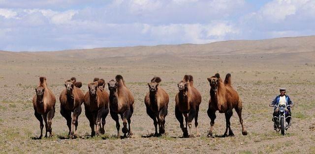 mongolia-692652_640