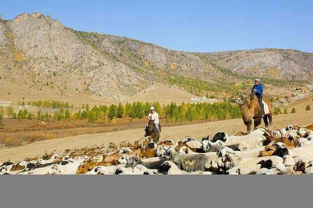 mongolia-80751_640