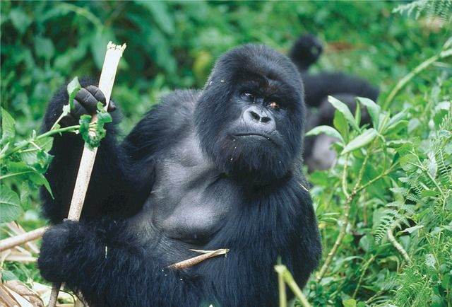 De 4 mooiste nationaal parken van Rwanda
