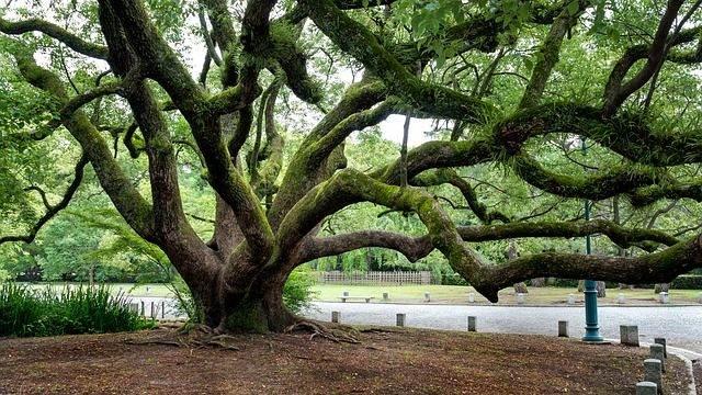 tree-1236626_640