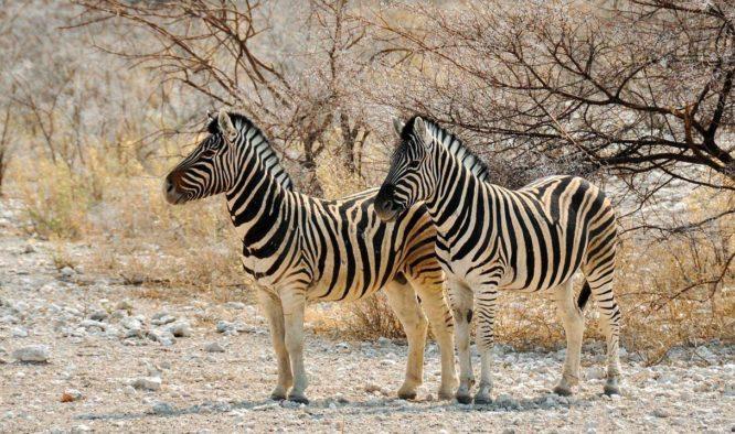 De vier mooiste wildparken van Zambia