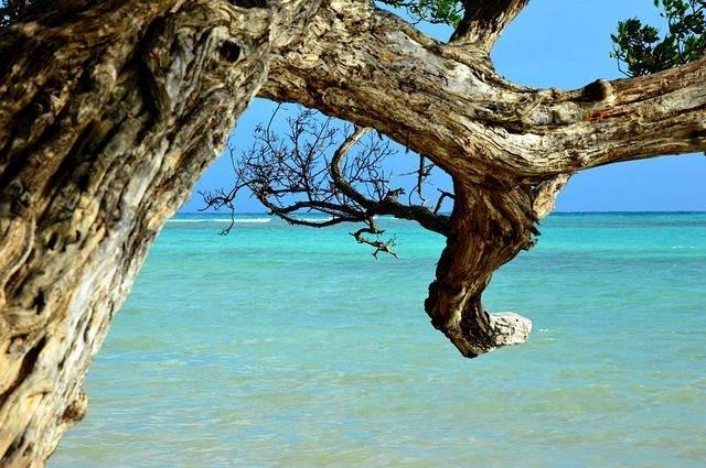 beach-1425326_640
