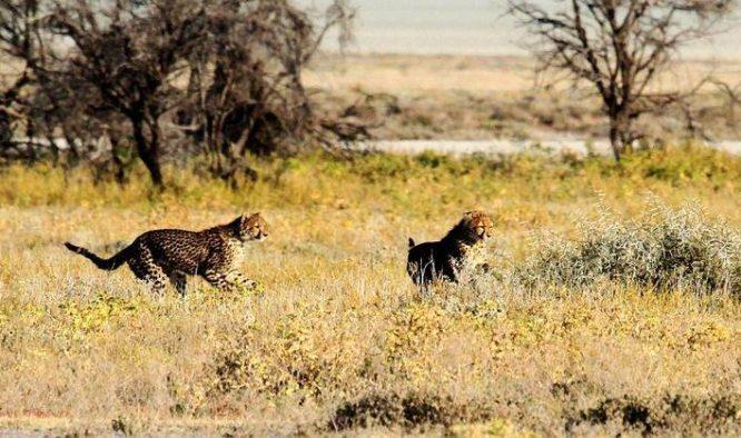 De 7 mooiste plekken in Namibië
