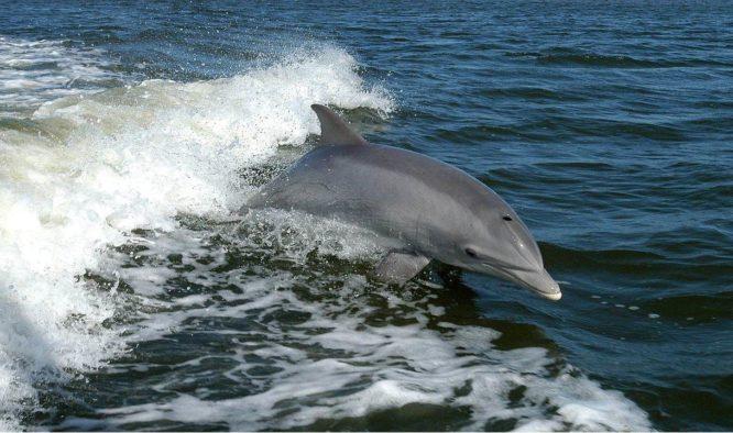 Zwemmen met dolfijnen in Mozambique