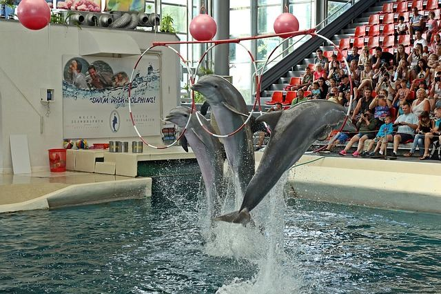 dolphins-1651975_640