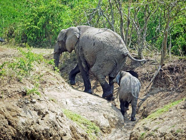 elephant-1535879_640