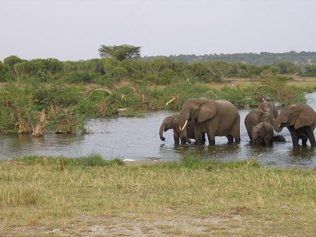 elephants-261672_640