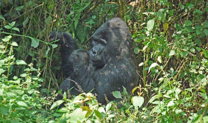 Op safari in Oeganda