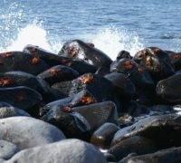 Vakantie Galápagos Eilanden