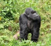 Vakantie Gisenyi Rwanda