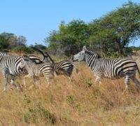 Vakantie Mutare