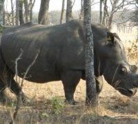 Vakantie Bulawayo Zimbabwe