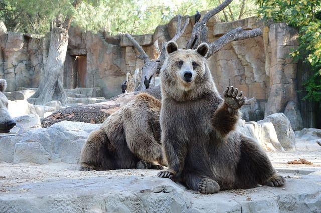 bear-1323389_640