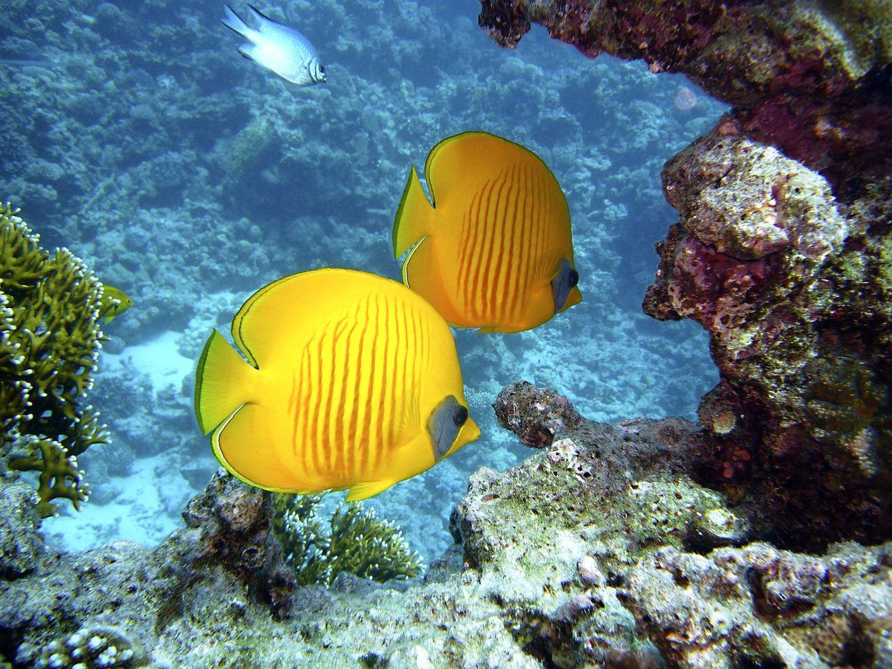 diving-1656380_1280