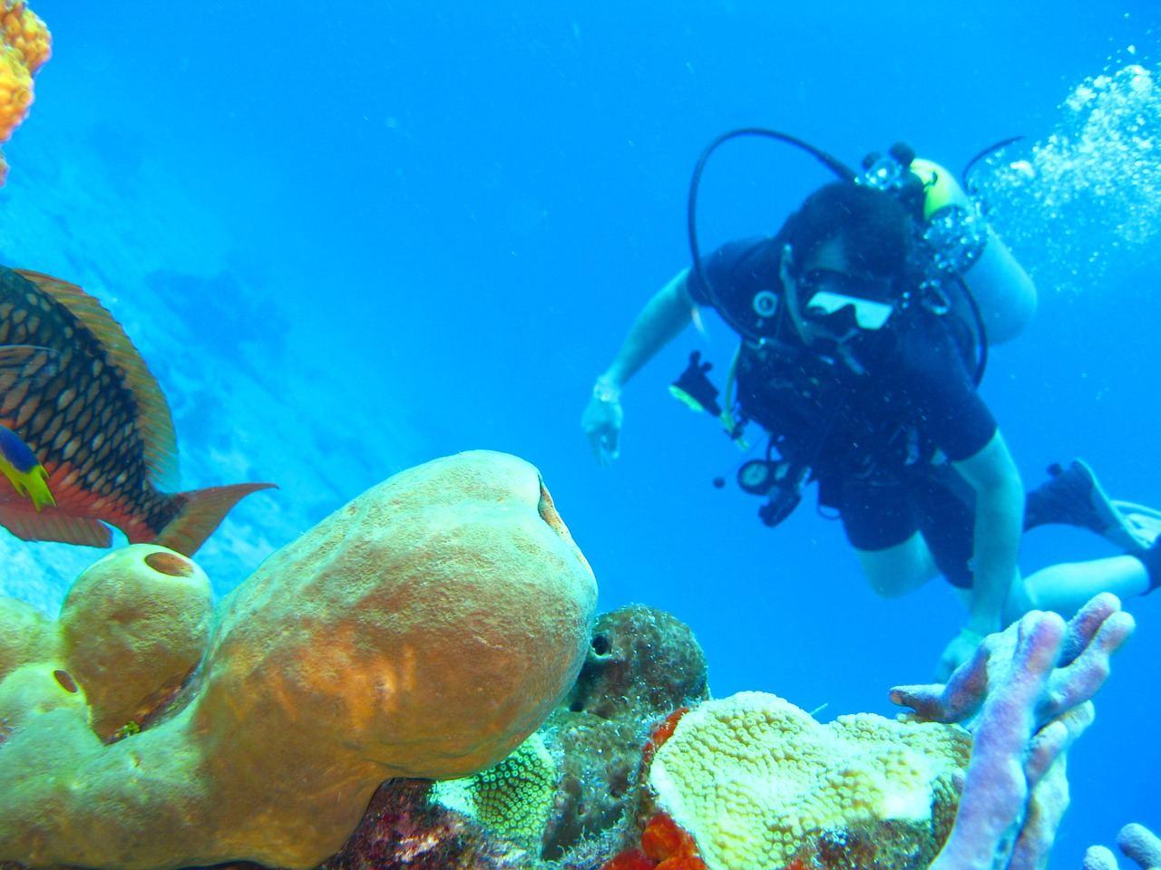 diving-1707761_1280