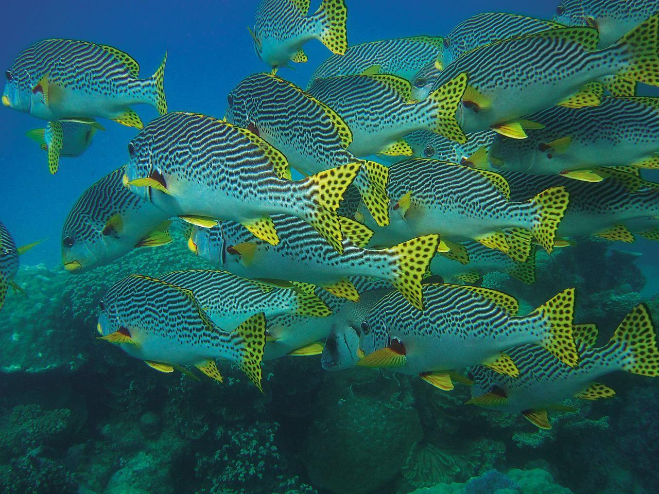 fish-swarm-432821_1280