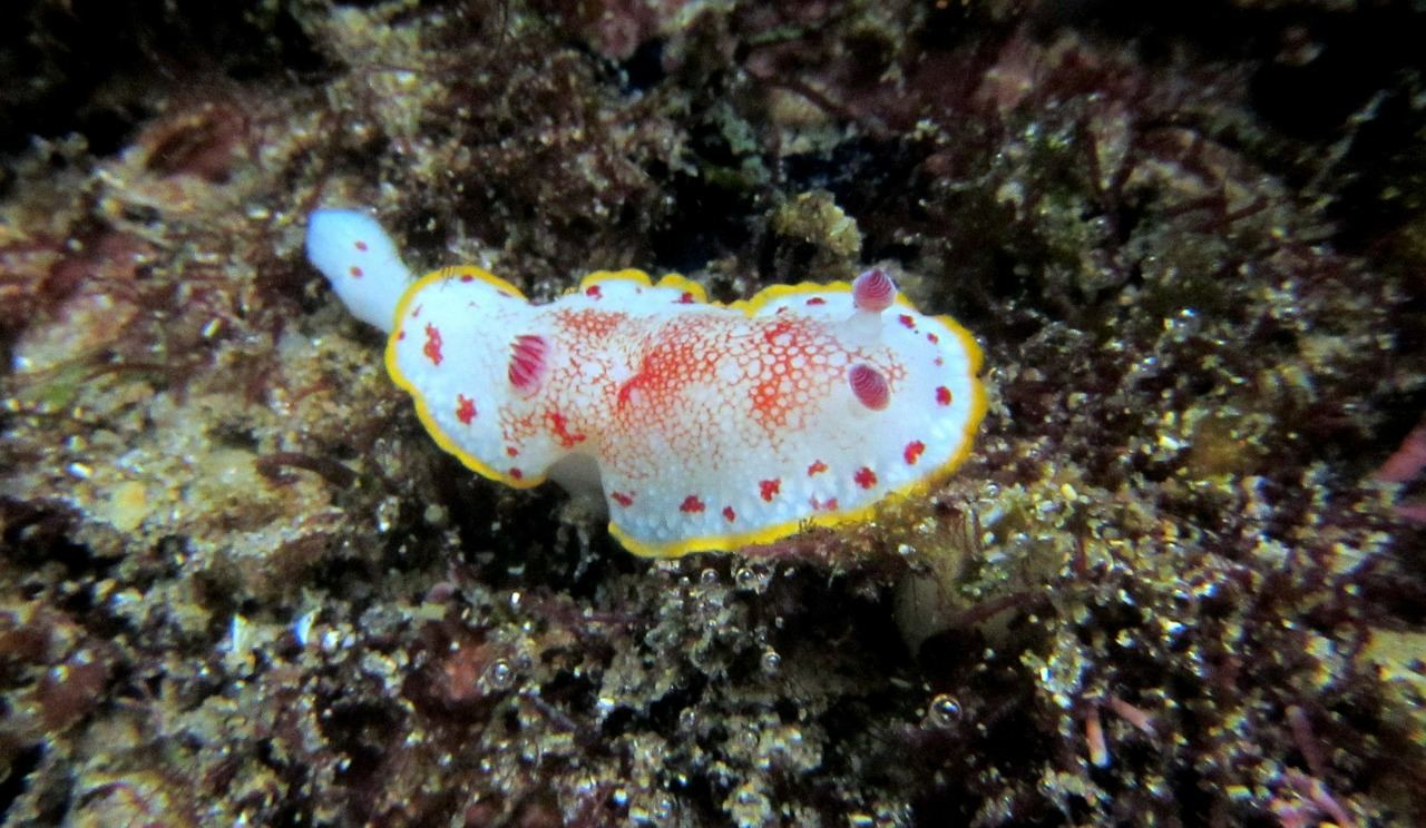 nudibranch-274937_1280