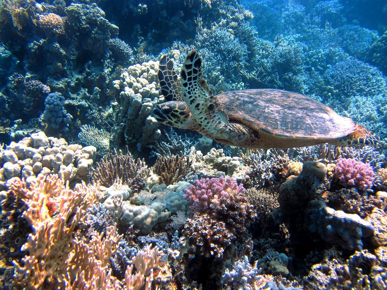 turtle-185484_1280