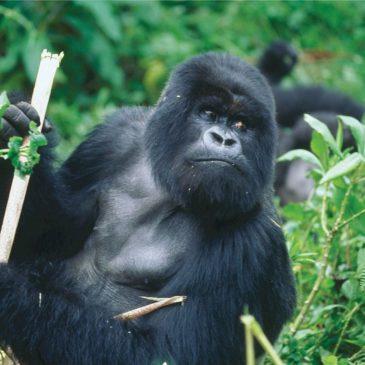 De mooiste nationale parken van Rwanda