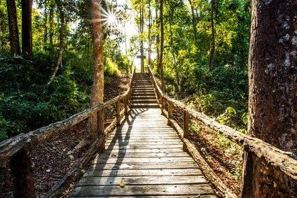 Jungletocht in Thailand