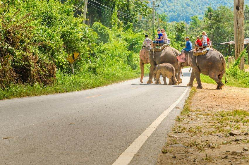 Olifanten ( rijden) in Thailand
