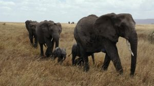Beste reistijd voor safari trip