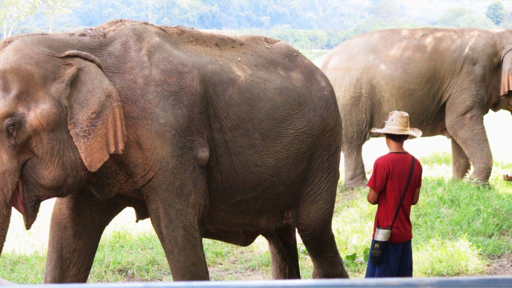 Elephant Nature Park in Chiang Mai