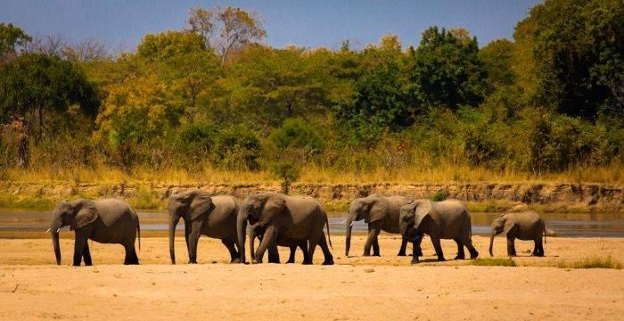 Goedkope rondreis Zambia
