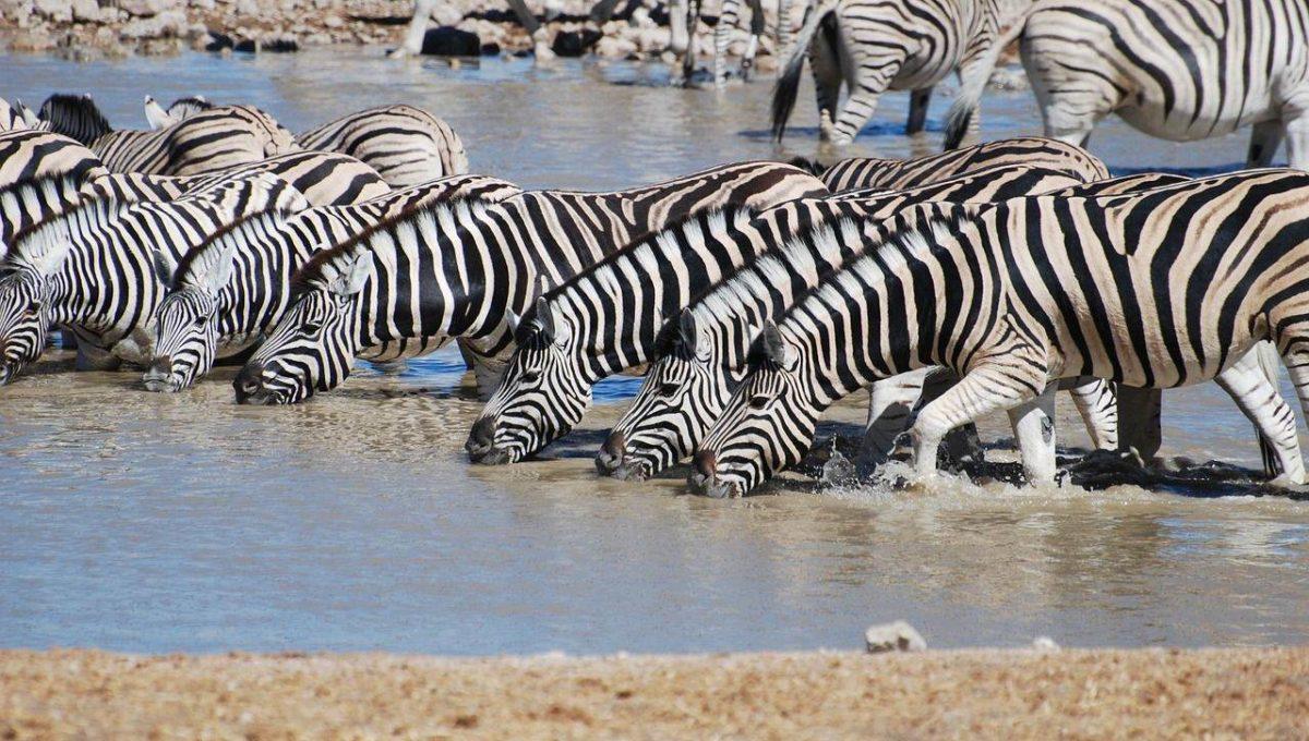 Mountain Zebra National Park Zuid Afrika