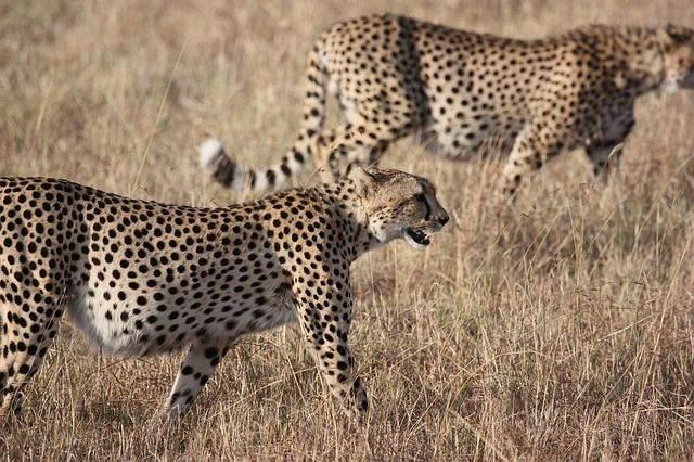 zuid-afrika1