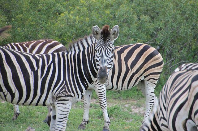 zuid-afrika14