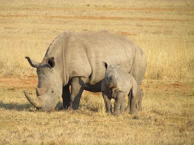zuid-afrika19