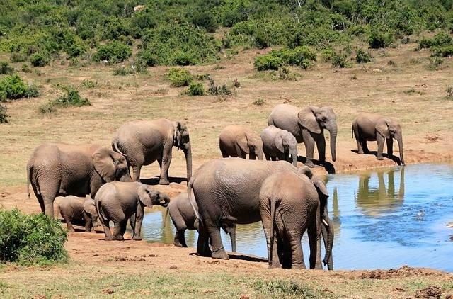 zuid-afrika2