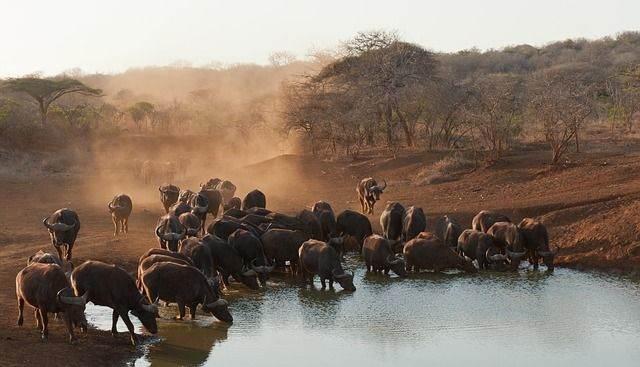 zuid-afrika32
