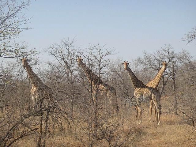 zuid-afrika40